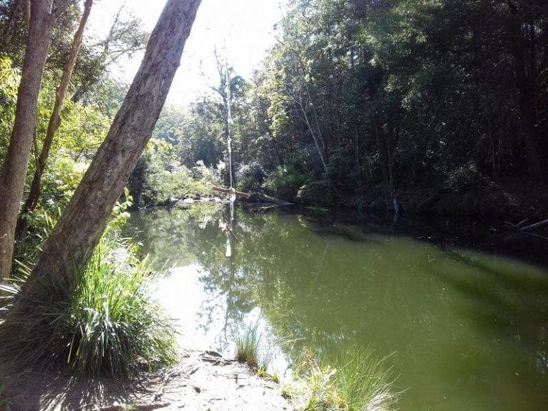 broadwater swimming hole daguilar national park queensland 768x576