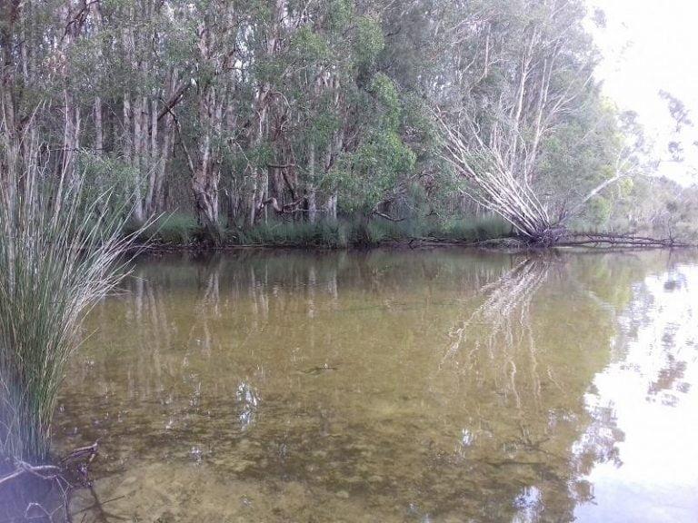 cudgen lake bogangar new south wales 1 768x576