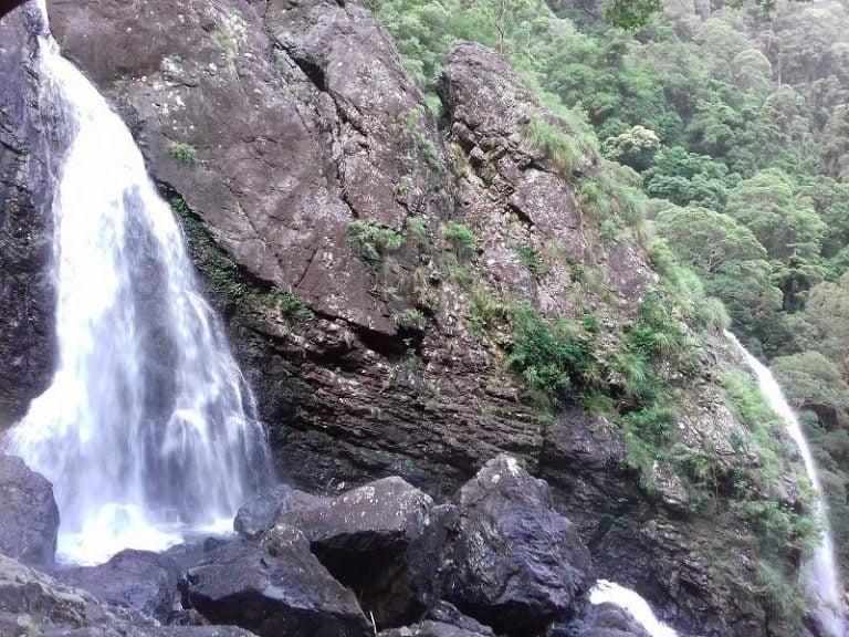 gleniffer falls dorrigo national park new south wales 768x576