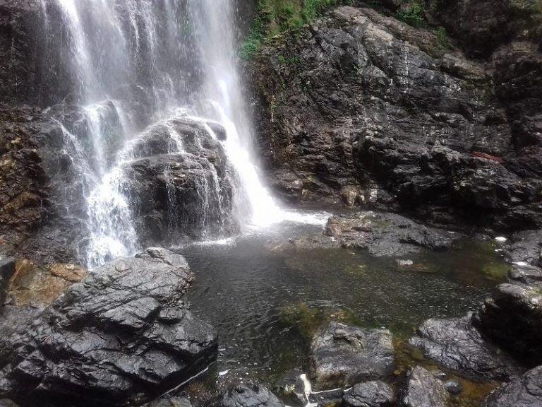 red cedar falls dorrigo national park new south wales 768x576