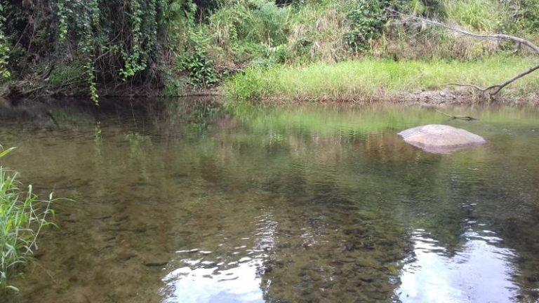 upper liverpool creek mena creek queensland 1 768x432