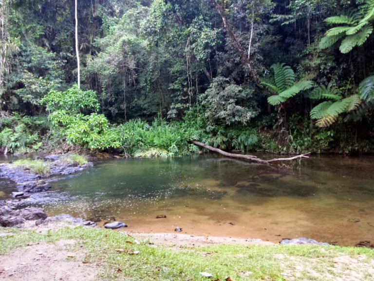 Henrietta Creek Wooroonooran National Park QLD 768x576